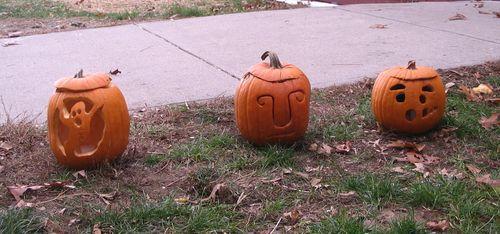 Drumlin pumpkins 102910