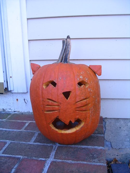 Harding cat pumpkin 110110