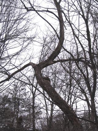 Curvy tree 022310