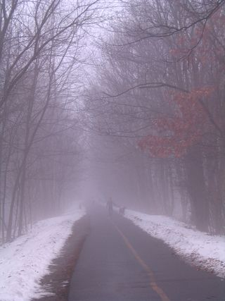 Bike trail fog