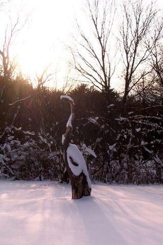 Tree bird 011511