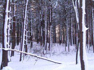 Treescape 011511