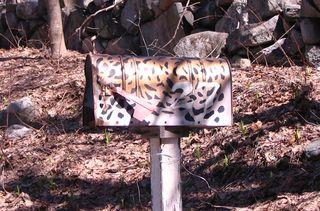 Cheetah mailbox 040311