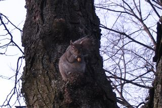 Squirrel public garden.jpg