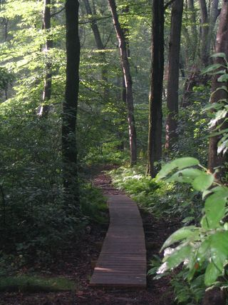 Boardwalk in woods