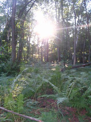 Sun in trees Parker