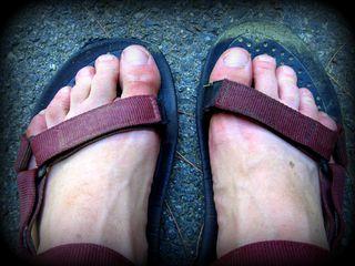 Pollen feet 052612