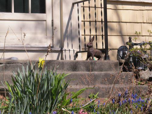 Rabbit steps 040712