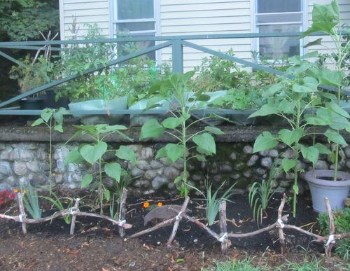 Garden 072412