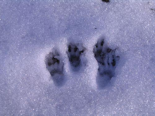 Foot prints 2001