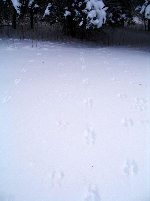 Tracks 011511