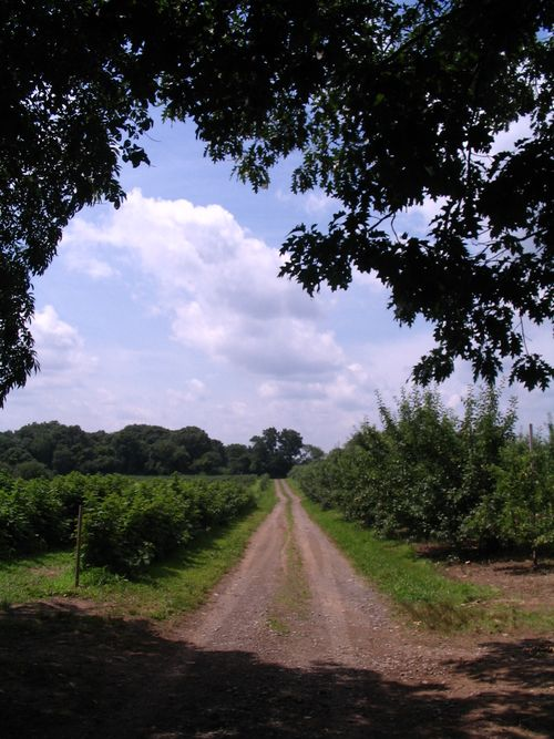 Russel orchards path