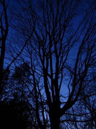 Evening backyard 031610