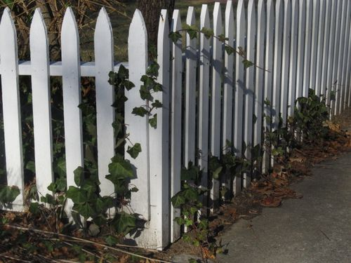 Ivy fence winchester 112913