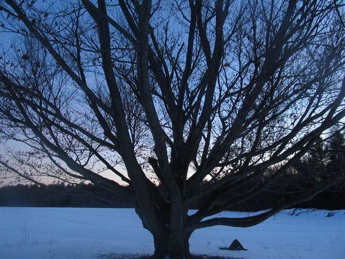 Tree silhouette lincoln 010414