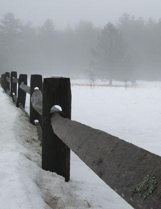 Foggy fence tree 022214