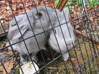 Jennas rabbits 10182014-001