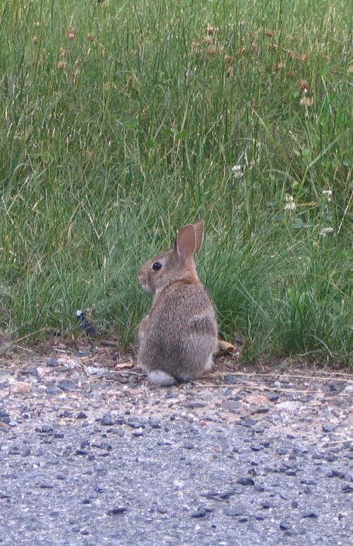 Bunny back 070310
